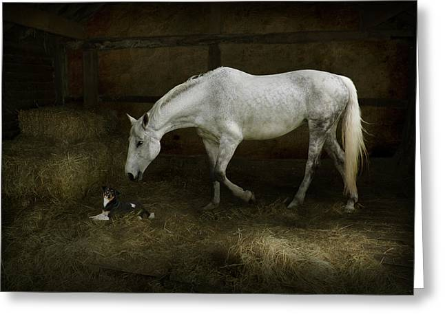 Horse And Puppy In Stable Greeting Card