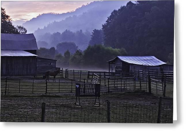 Horse At Home - North Carolina Farm Scene Greeting Card by Rob Travis