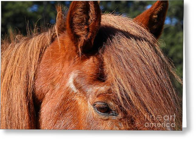 Horse At The Ranch . 7d9761 Greeting Card by Wingsdomain Art and Photography