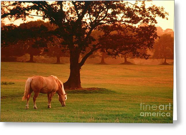 Horse Greeting Card by Carl Purcell and Photo Researchers