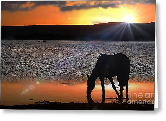 Horse Drinking Water  Greeting Card