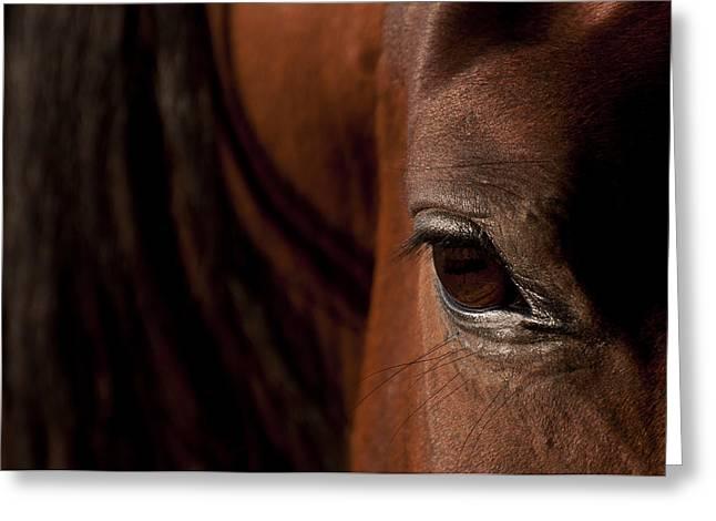 Horse Eye Greeting Card by Michael Mogensen