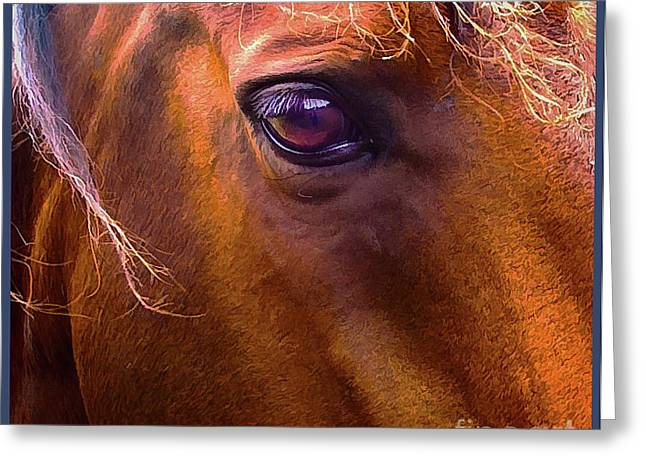 Horse Eyes Greeting Card