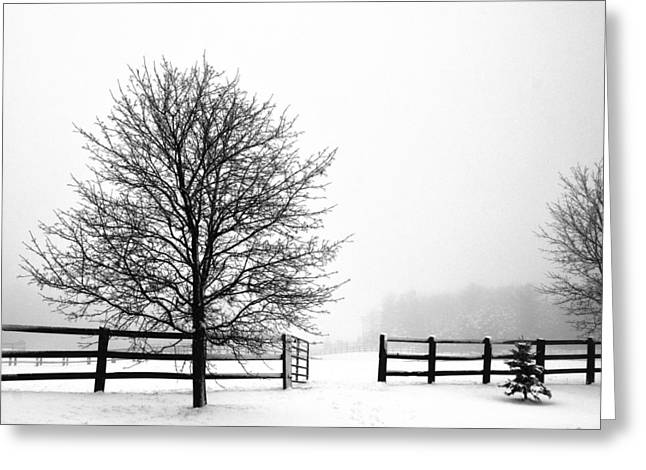 Greeting Card featuring the photograph Horse Farm In The Winter by Nick Mares
