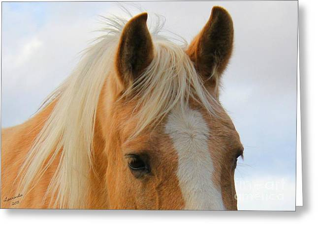 Greeting Card featuring the photograph Horse Head Study by Laurinda Bowling