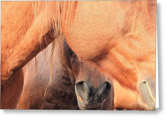 Horse Hide 2 Greeting Card