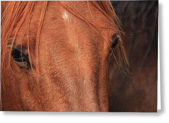 Horse Hide Greeting Card