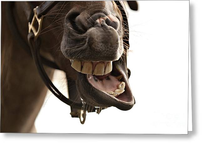 Horse Humour Greeting Card by Heather Swan