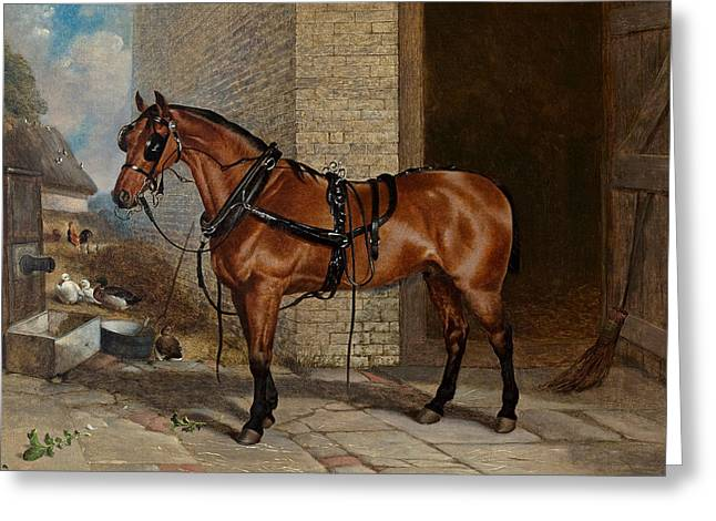 Horse In Harness Greeting Card by Robert Nightingale