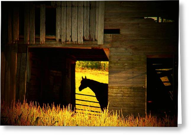 Horse In The Barn Greeting Card by Joyce Kimble Smith