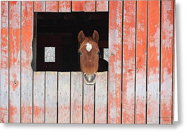 Greeting Card featuring the photograph Horse In The Barn by Laurinda Bowling