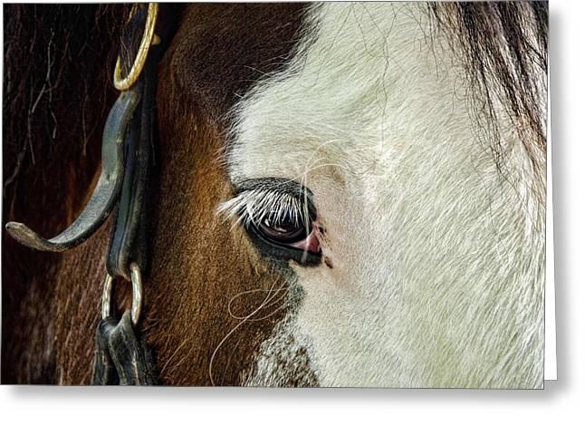 Horse Greeting Card by Jana Smith