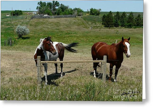 Horse On A Warm Day Greeting Card by Bobbylee Farrier