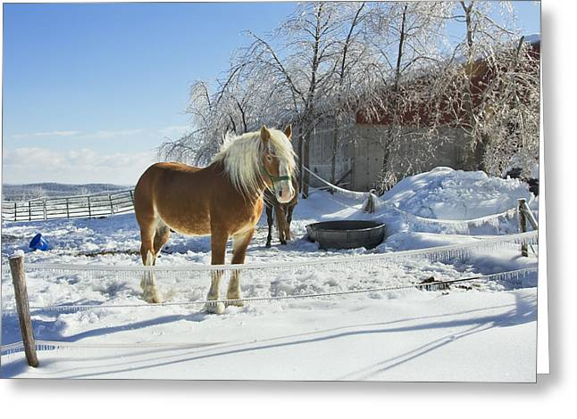 Horse On Maine Farm After Snow And Ice Storm Photograph Greeting Card by Keith Webber Jr
