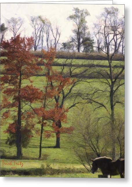 Horse On The Pasture Greeting Card by Trish Tritz