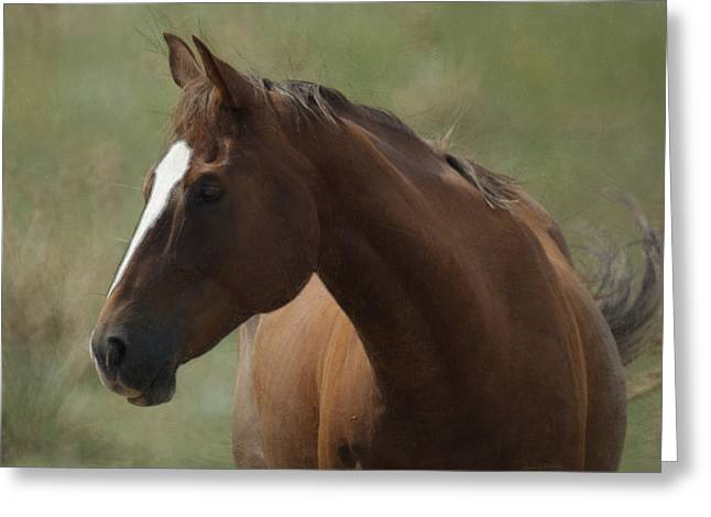 Horse Painterly Greeting Card by Ernie Echols