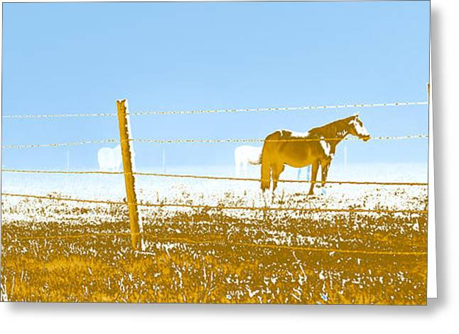 Horse Pasture Revblue Greeting Card by Paulette B Wright