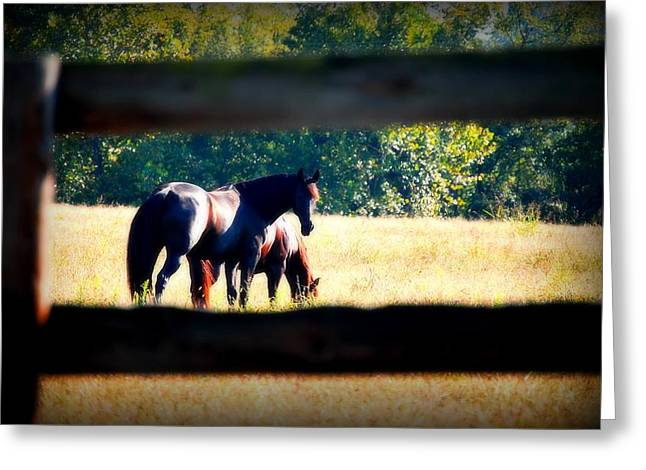 Greeting Card featuring the photograph Horse Photography by Peggy Franz
