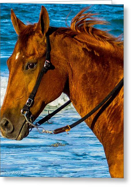 Horse Portrait  Greeting Card by Shannon Harrington