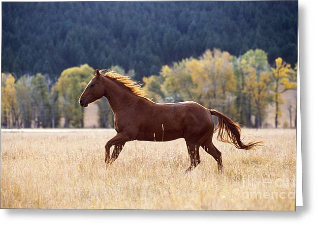 Horse Running Greeting Card by Alan and Sandy Carey and Photo Researchers