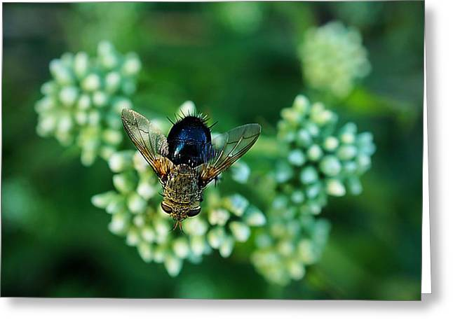 Horsefly No Bother Me Greeting Card by Beth Akerman