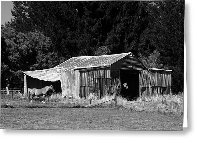 Horses And Old Barn Greeting Card