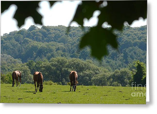 Horses And Summer Breeze Greeting Card