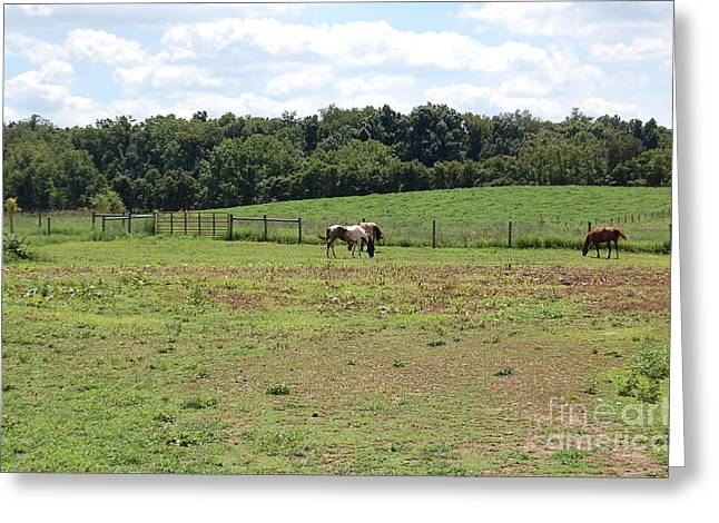 Horses At A Distance Greeting Card