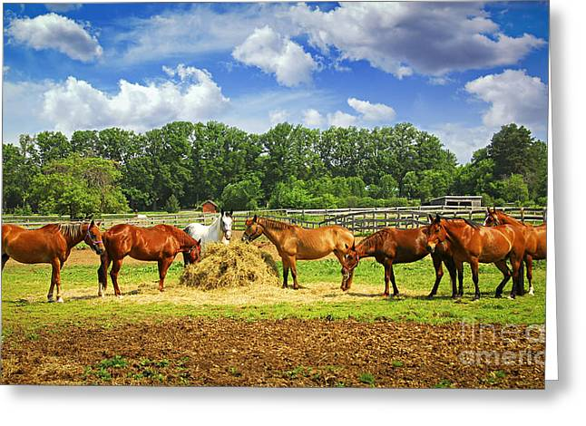 Horses At The Ranch Greeting Card