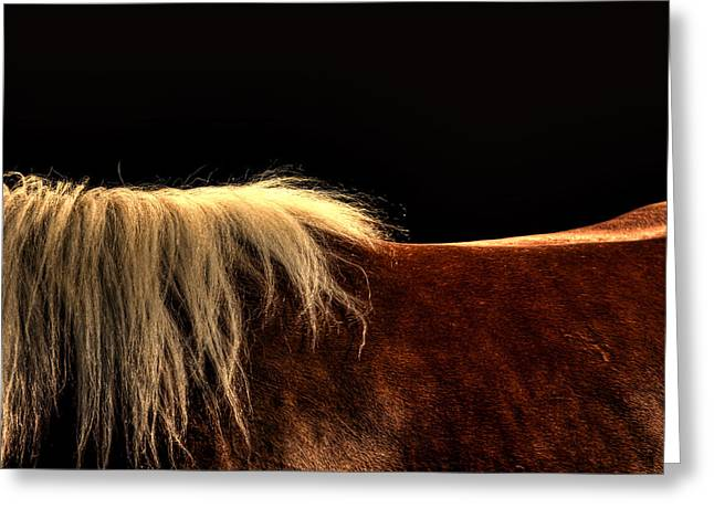 Horses Back Greeting Card by Gary Smith