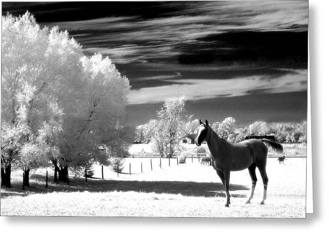 Horses Black White Surreal Nature Landscape Greeting Card by Kathy Fornal