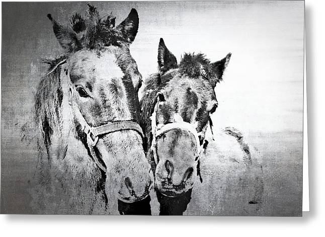 Horses By The Road Greeting Card by Kathy Jennings