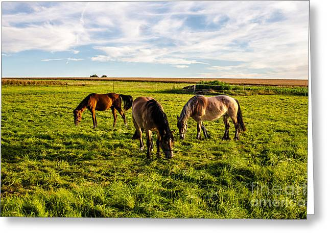 Horses In The Sunset Greeting Card by Bodo Herold
