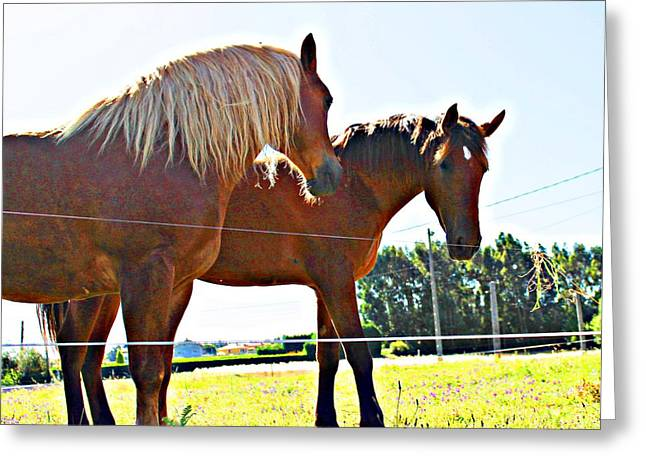 Horses Greeting Card by Jenny Senra Pampin