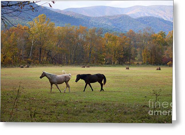 Horses Greeting Card by Lena Auxier