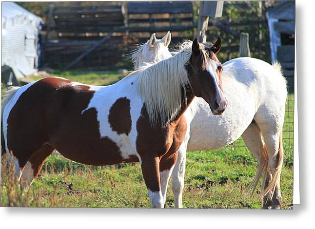 Horses Greeting Card by Mike Stouffer