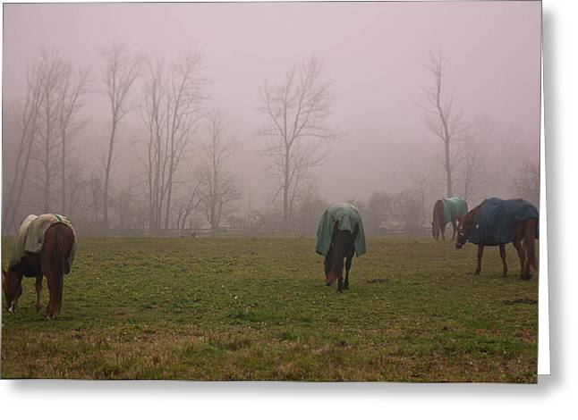 Greeting Card featuring the photograph Horses by Nick Mares