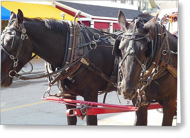 Horses Of Mackinac Greeting Card by Michael Carrothers