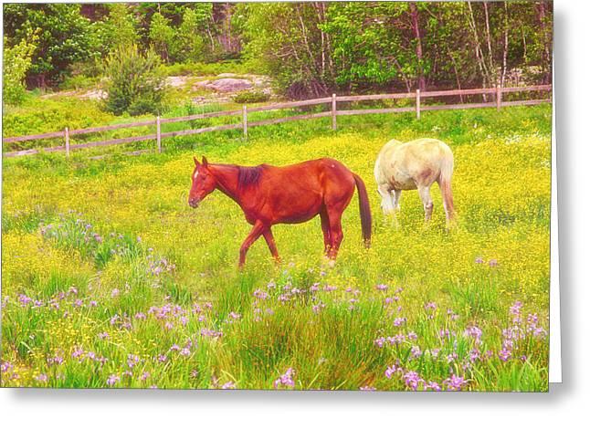 Horses Paradise Greeting Card by Karol Livote