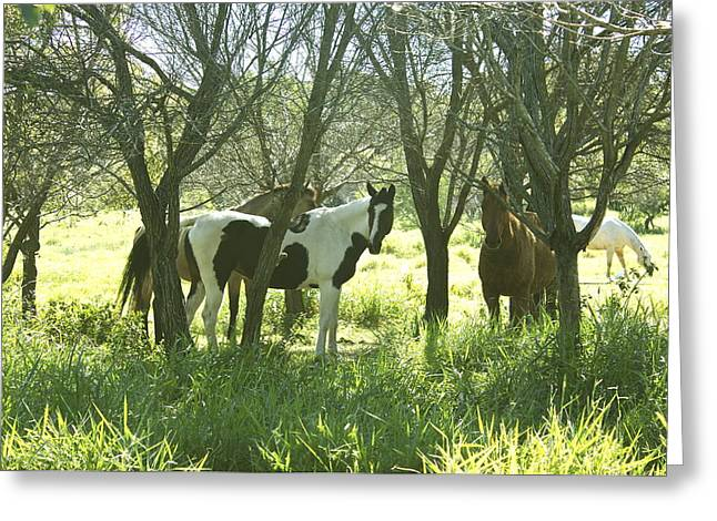 Horses Under Trees In The Shade. Greeting Card by Michael Clarke JP