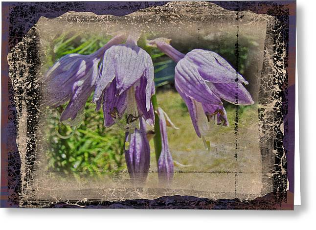 Hosta La Vista Baby Greeting Card by Mother Nature