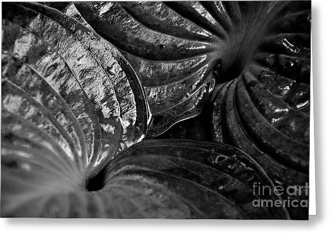 Hosta Leaves Greeting Card by Tanya  Searcy
