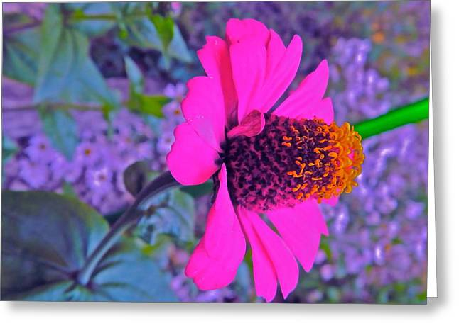 Hot In Pink Greeting Card by Randy Rosenberger