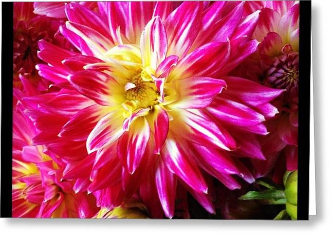 Hot Pink Dahlias Greeting Card by Ruby Hummersmith