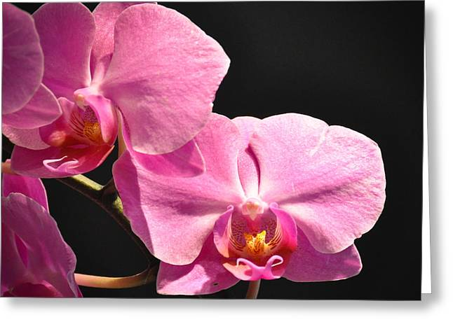 Greeting Card featuring the photograph Hot Pink Orchids by Ronda Broatch
