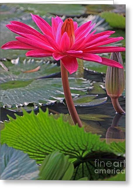 Greeting Card featuring the photograph Hot Pink Waterlily by Larry Nieland