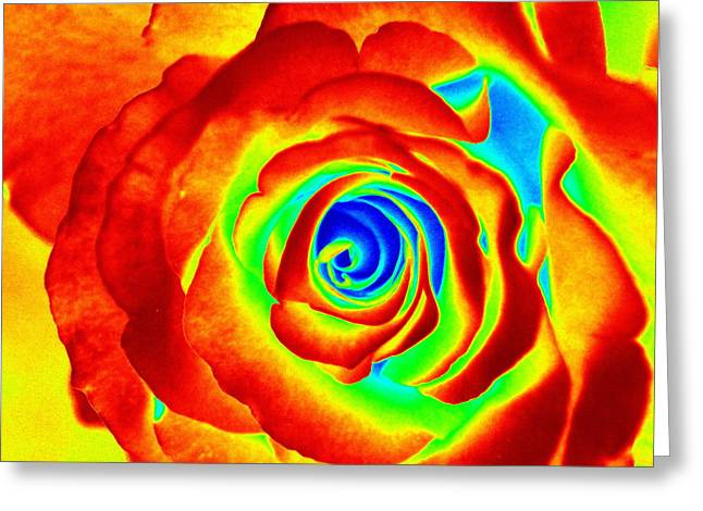 Hot Rose Greeting Card by Paul  Wilford