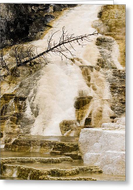 Greeting Card featuring the photograph Hot Spring Pine by J L Woody Wooden