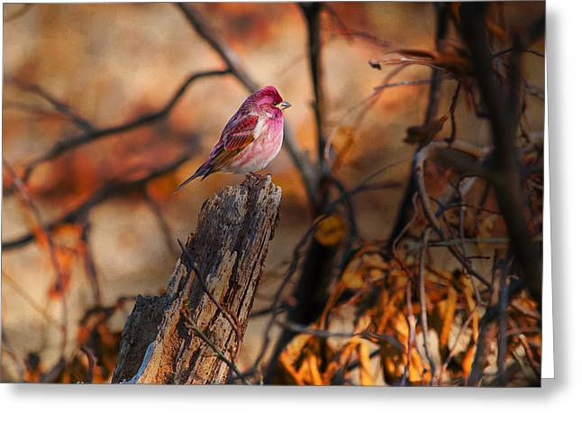House Finch High And Lifted Up Greeting Card