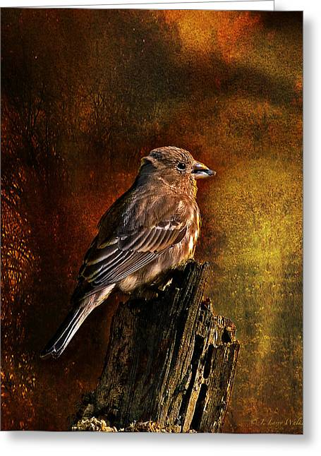 House Finch With Sunflower Seed Greeting Card by J Larry Walker